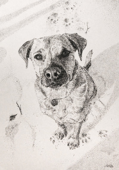 May Kopecky Darwin by May Ling Kopecky Ink Drawing cute puppy dog